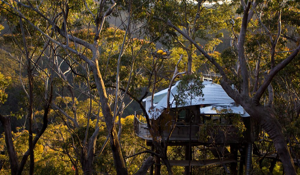 Love Cabins Treehouse Wollemi