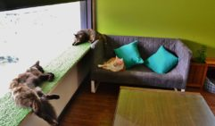 A cat nap or cat yoga at Cat Cafe.