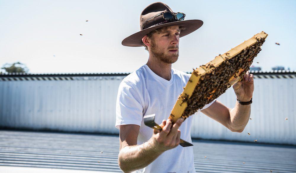 beekeeping at Bee One Third Brisbane