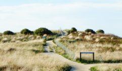 Coastal grasses adorn the path that leads you to the remarkable shoreline of the Bay of Fires