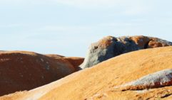 The ochre boulders of the Bay of Fires form a stark contrast with a clear blue sky (photo: Corrie Bond).
