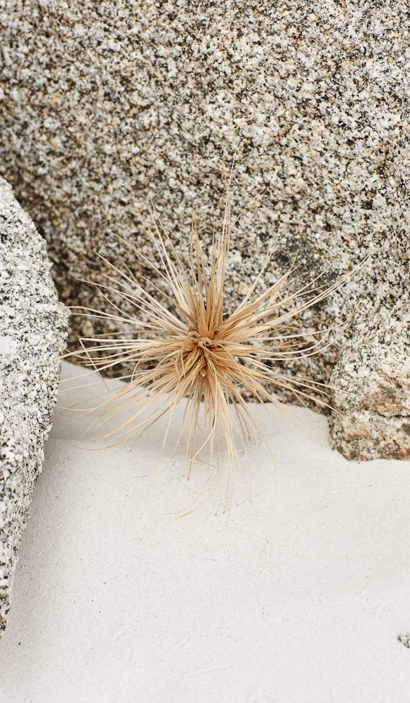 Spiky spinifex Bay of Fires