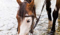 Matilda Bogong Horseback Adventures