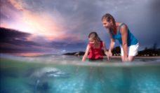 Dolphin feeding comp dusk landscape