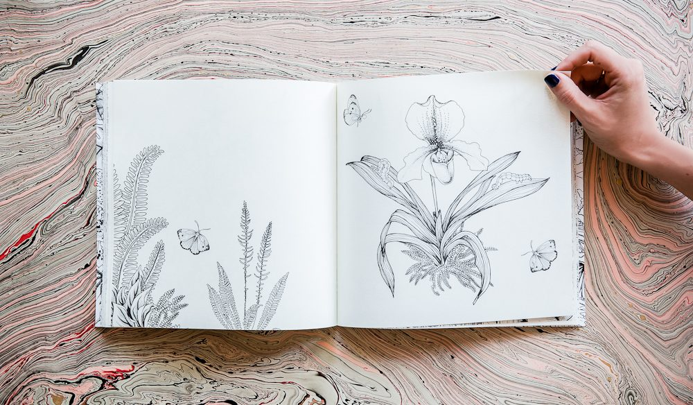 Adriana Picker's wonderful illustrations of plant life in her new colouring-in book Where The Wildflowers Grow (photo: Nikki To).