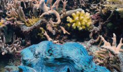 Vibrant giant clams are always a treat to find.