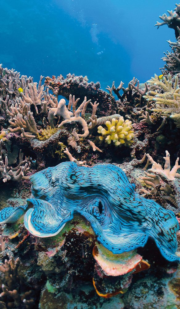 Giant Clam Great Barrier Reef