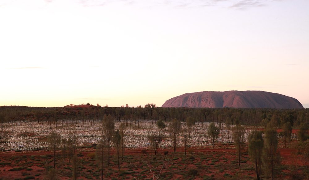 Uluru overshadows Field of Light