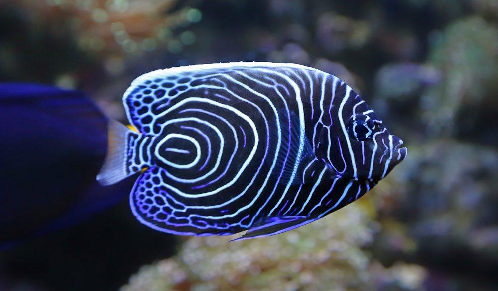 Great Barrier Reef 39 S Scuba Dive Mecca Lady Elliot Island