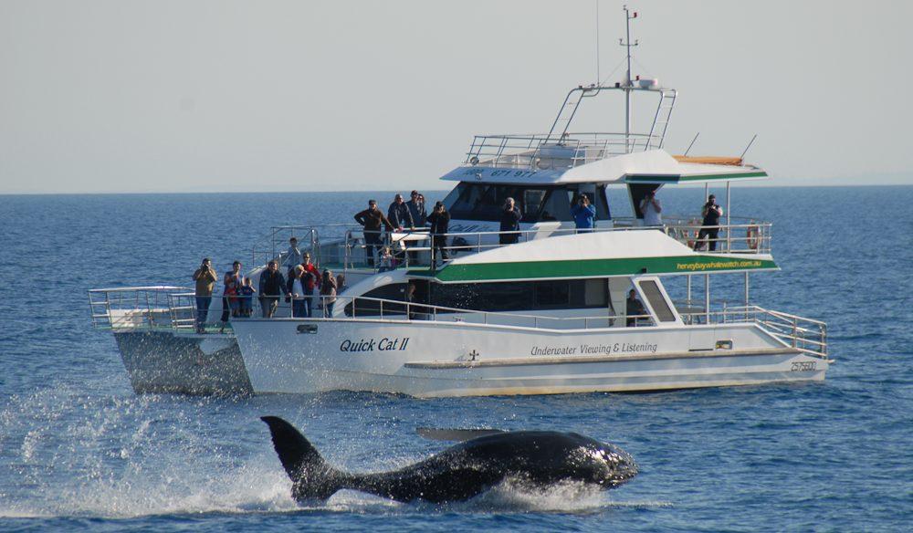 Kingfisher Bay Resort.