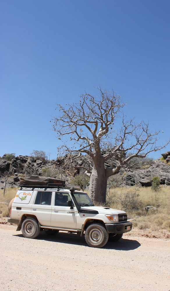 Boab tree Napier Ranges