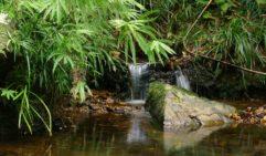 Refreshing daytrip: Crystal Cascades near Cairns.