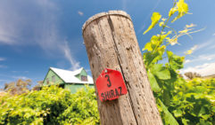 Vineyards in the Heathcote Region, central Victoria, Australia: Barnadown Run
