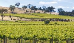 Vineyards in the Heathcote Region, central Victoria, Australia: Tyrells Estate