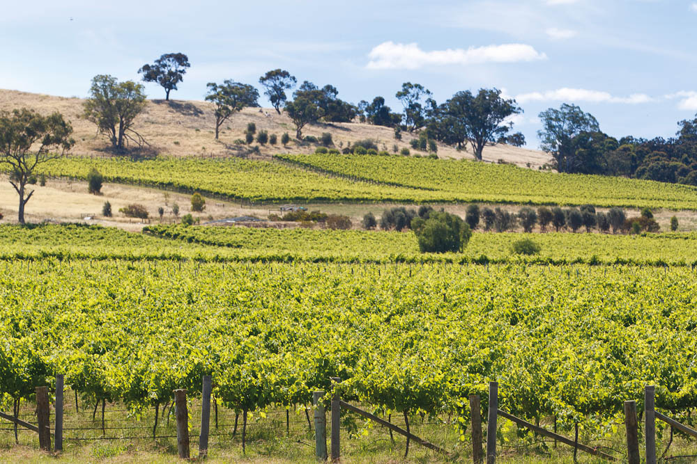 Vineyards in the Heathcote Region, central Victoria, Australia: Tyrells Estate