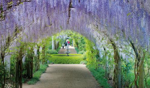 Beautiful Gardens at the Alowyn Gardens