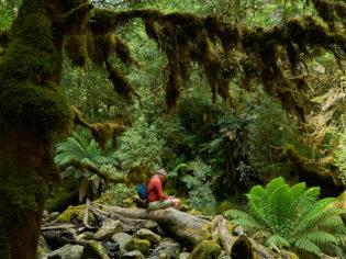 Growling Swallet walk Mt Field National Park