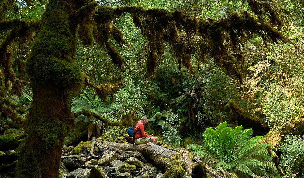Growling Swallet, Mt Field National Park, Tasmania, a wonderland of ferns, mossy logs and vanishing river (photo: Melanie Ball).