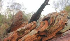 Orange rocks covered in lichen in Ikara (photo: Lara Picone).
