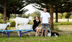 Emily Ryves and her husband Zach Sanders run The Hilli Goat Farm on Norfolk Island (photo: Annette O'Brien).