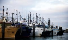 Port Lincoln's fishing fleet moored up (photo: Lara Down).