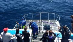 Divers get ready to enter the cage with Calypso Star Charters (photo: Daniel Down).