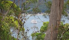 The Coral Expeditions 1 vessel moored in Adventure Bay, Bruny Island. (photo: Nathan Dyer).