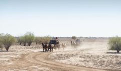 Head off at a gallop in a Cobb & Co coach in outback Queensland.
