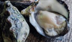 Plump oysters from Coffin Bay, on Eyre Peninsula's lower west coast (photo: Michael Wee).