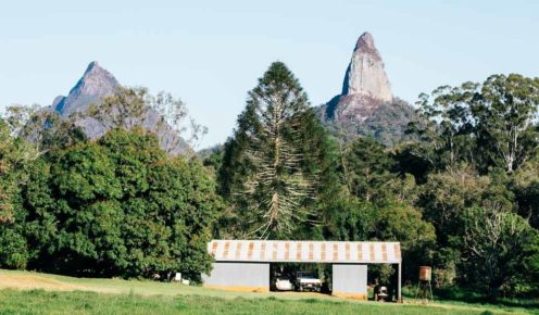 A pine tree can't compete with the dramatic buttress of rock that is Mt Coonowrin (photo: Elise Hassey).