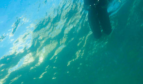 A cuttlefish encounter, Cabbage Tree Bay (photo: Peter McGee  / Goodviz photography).