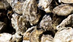In summer Joe can sell up to 250 dozen Bruny oysters day.  (photo: Peter Tarasiuk).