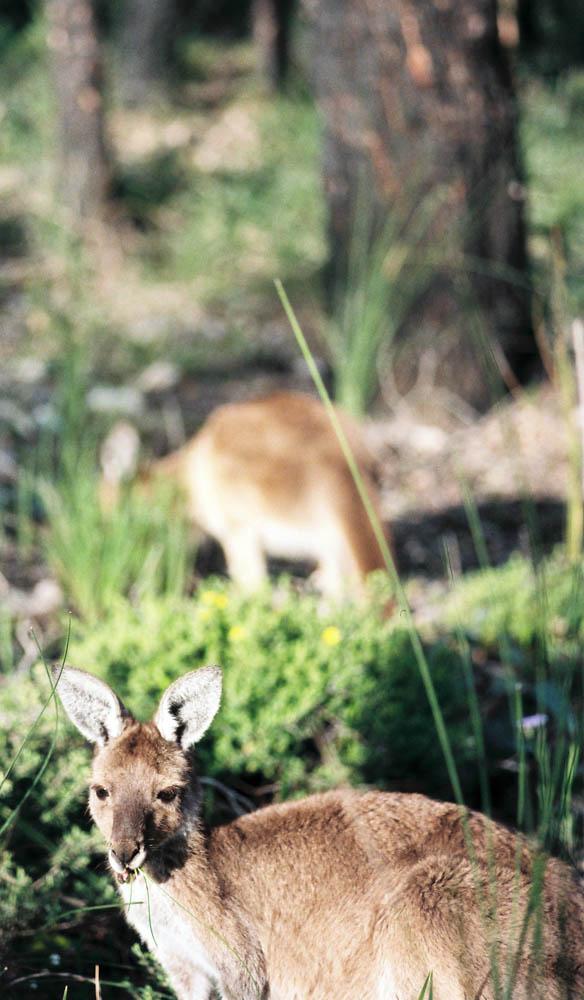 mammals australian wildlife western australia
