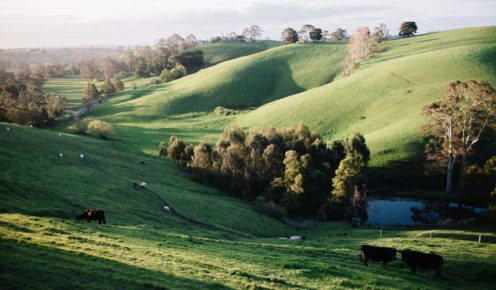 The bucolic countryside of South Gippsland (photo: Brenner Lowe).