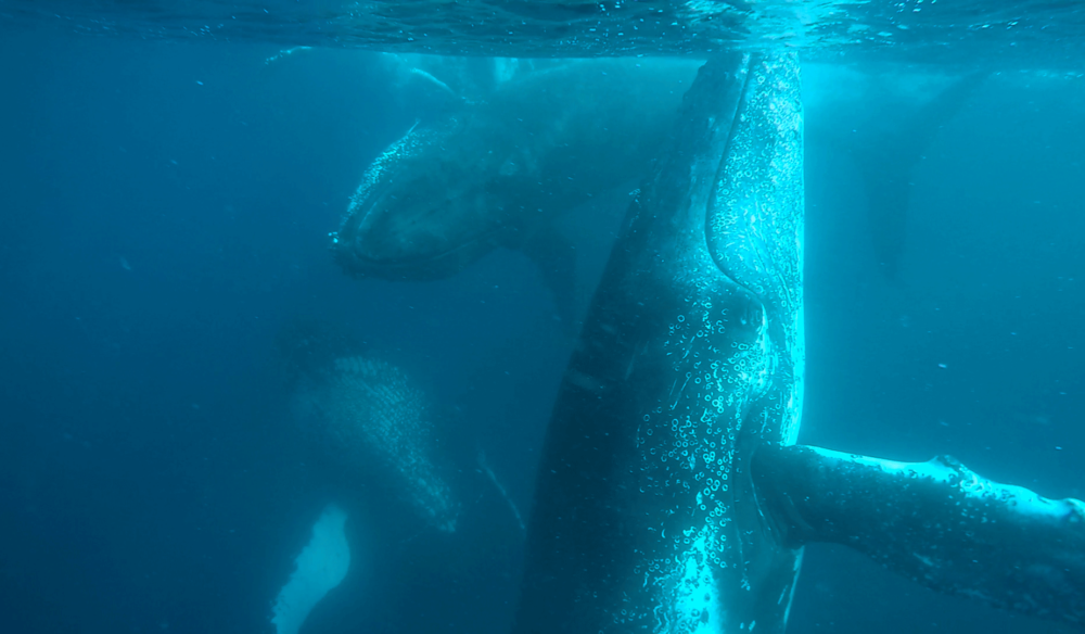 Win a whale swimming experience with Sunreef Mooloolaba