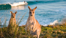 The beautiful wildlife at Look At Me Now Headland