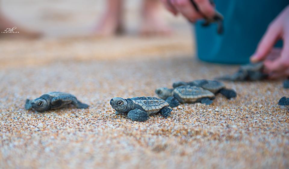 Turtle image 3