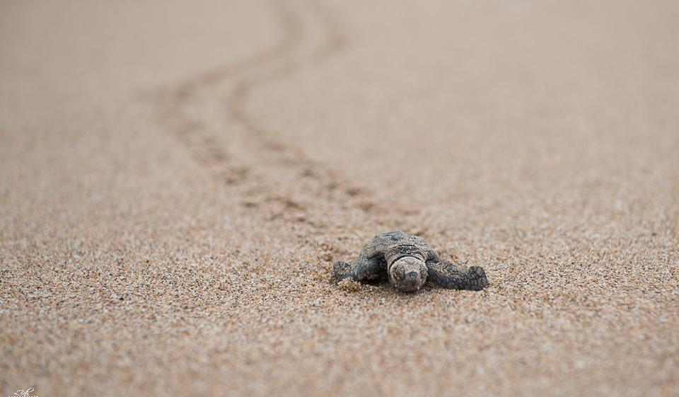 Turtle Imag 4