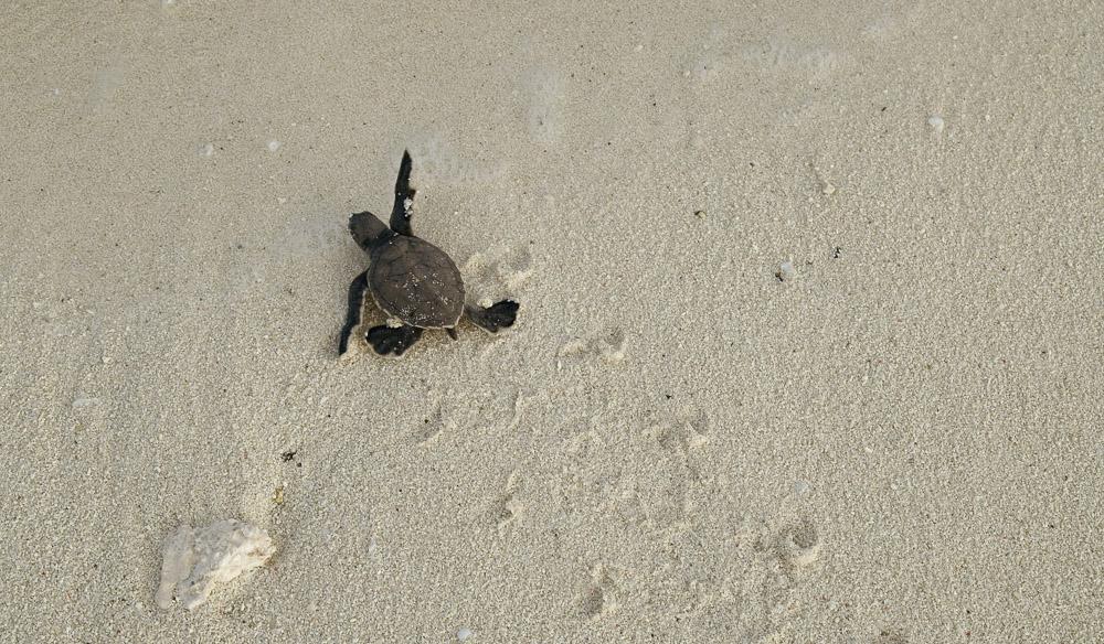 Turtle Image 5