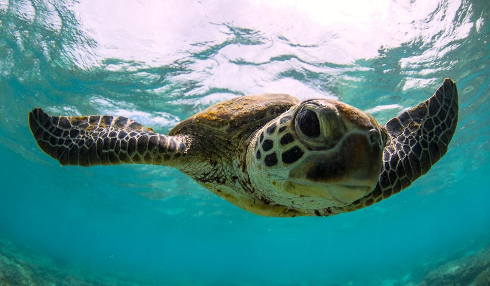 Turtle image 6