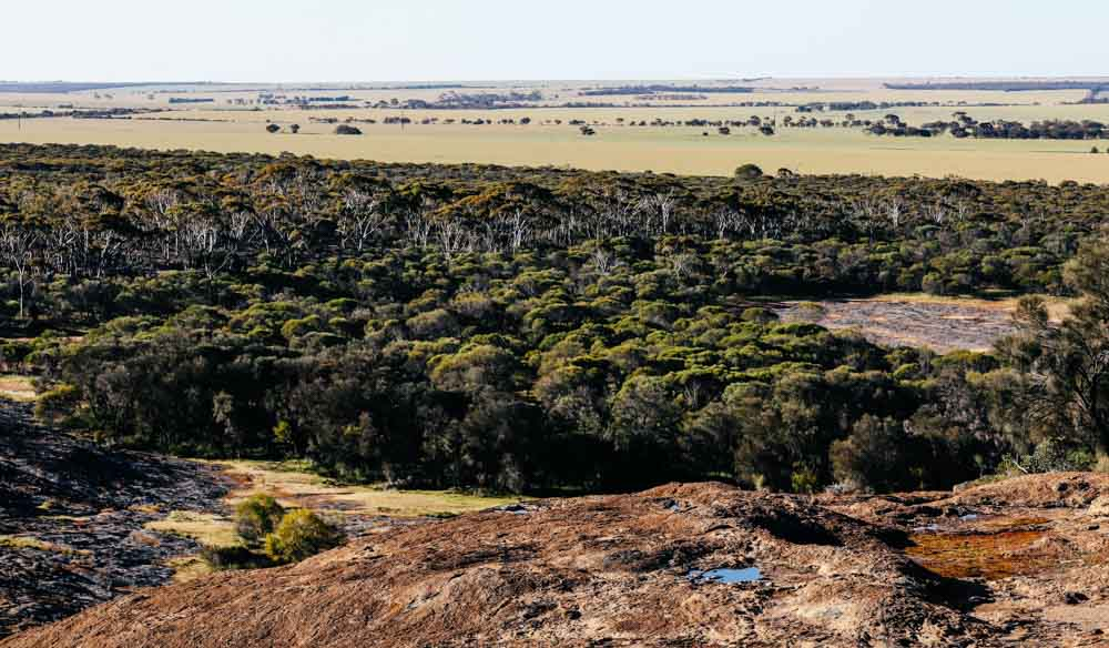 WA's landscape dramatically changes from rough brown terrain to lush green trees (photo: Elise Hassey).