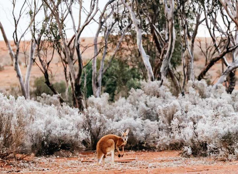 western australia outback roadtrips golden outback