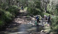 The forests of the Scenic Rim are laced with flowing creeks, blast through on the bike if you're brave (photo: Lara Down).