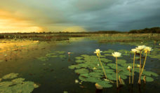 landscape kakadu nothern territory holdays attractions culture outback