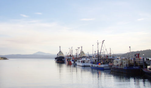 Fishing boats docked in the tranquil waters of sleepy Snug Cove in Eden.