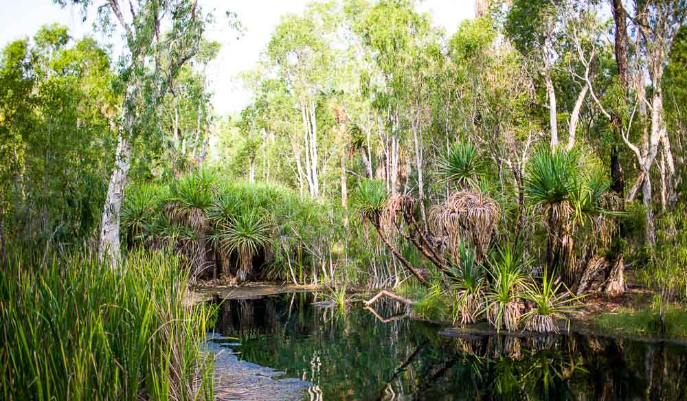 This NT waterhole is regularly patrolled for crocodiles by the rangers. (photo: Jennifer Pinkerton).