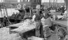 Men sorting fish at the old Melbourne Fish Markets. (credit: courtesy of State Library of Victoria).