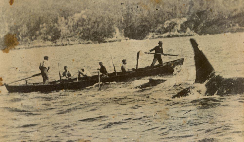 the killer whale trail nsw eden boydtown ben boyd