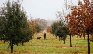 Truffle Canberra farm hunting