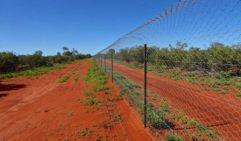 Out at Currawinya National Park we have a predator exclusion fence where we'll be reintroducing bilbies again soon.